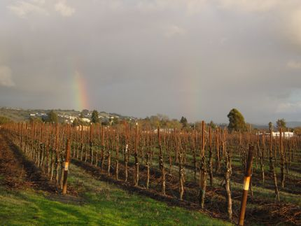 Double rainbows appeared over the vineyards in Santa Rosa, California, during our holiday stay.