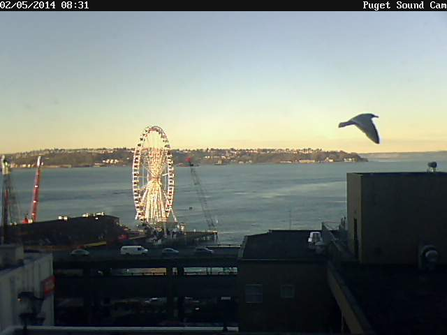 PS Cam with Seattle Great Wheel and seagull northwest wining and dining downtown seattle website link