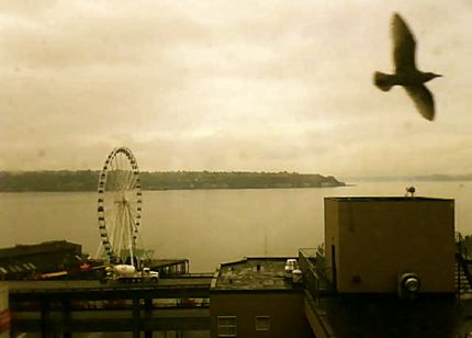 PScam seagull sepia northwest wining and dining website link