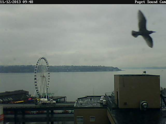 Puget sound cam giant seagull northwest wining and dining website link