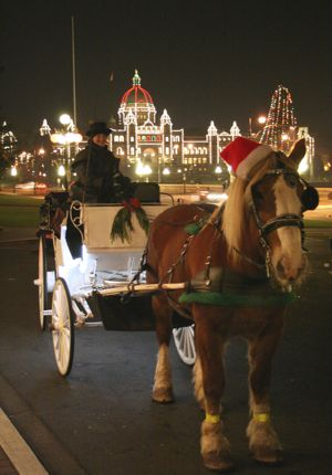 Victoria British Columbia Horse and Buggy Christmas Holiday photo