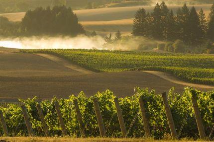 North Willamette Wine Trail